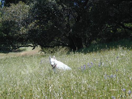 Gallery Image 2003-05-11_19.42.32.jpg