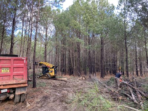 land clearing and road