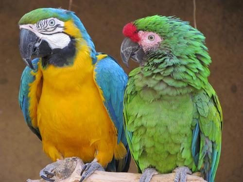 Gallery Image macaw.jpg