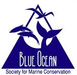 Blue Ocean Society - Marine Conservation