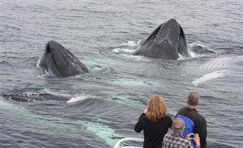 Whale watch with Blue Ocean Society naturalists and interns