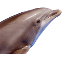 Silver Bullet Dolphin & Sightseeing Tours - Wildwood
