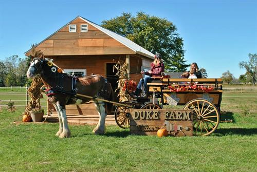 Clydesdale and Wagon