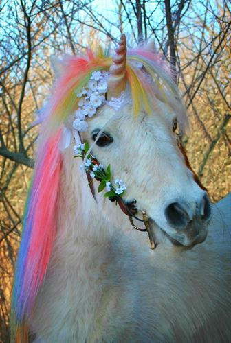 Unicorn Pony