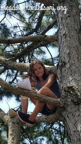 I spy a student journaling in a tree.