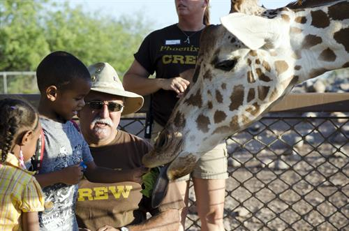 Get up-close and personal with the tallest mammal at the Phoenix Zoo! This experience is sure to become a favorite destination spot on your visit to the Zoo.