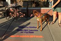 Sidewalk Poetry Enlivens Arlington Cultural District