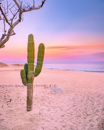 Cactus, Los Cabos