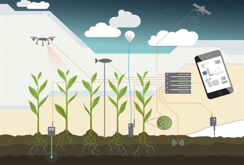 AgTech IT Consulting, Assessments, Managed Services and Support