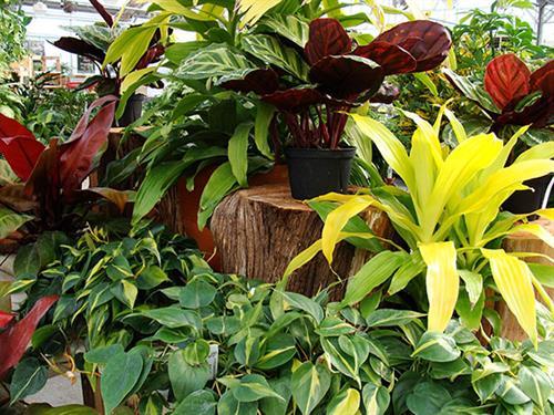 Gallery Image Houseplants_Dis_VariousB_1-18sw.jpg