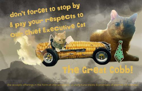 Cobb, the office cat