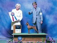 Best of Breed Conformation Class