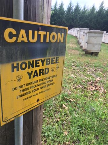 Our Home Apiary at Lake Lanier