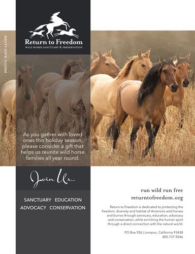 As you gather with your loved ones for the holiday season, consider a gift that helps us reunite wild horse families all year round.