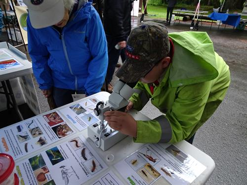 Learning about aquatic insects at the Molalla-Pudding Rivers Celebration in Canby