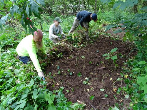 Molalla River Watch project to help landowner remove invasive ivy and plant natives for a healthier habitat