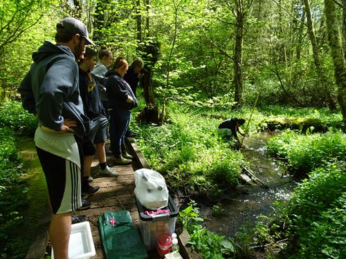 Collecting aquatic insects at Aquila Vista with Molalla High School students