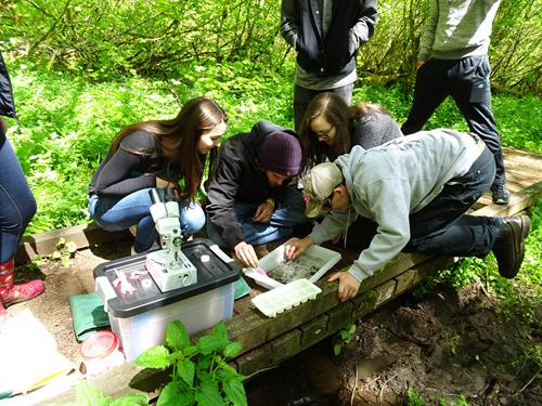 Identifying collected aquatic insects with Molalla High School students