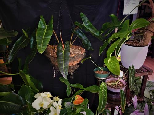 A selection of the Rare and Exotic Plants that can be found at Vedas Plant Shopz