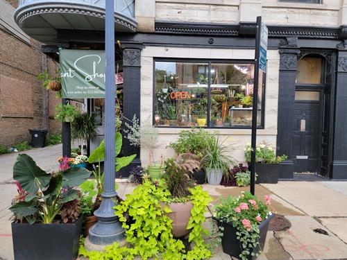 Vedas Plant Shop Storefront, located at 3907 N Damen Ave