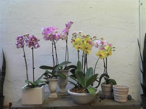Gallery Image assorted_orchids_in_stoneware.jpg
