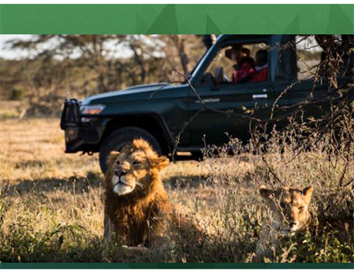 Gallery Image Simba_with_2_lions_in_jeep.png