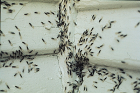 Termite swarms can be very scary but they are harmless and if you see them inside, we need to talk.