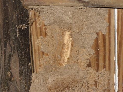 The thickness and density of a termite tunnel can give some hint to how long the problem has been there.