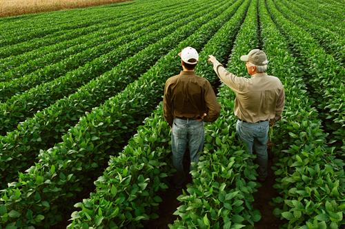Farmers, Cooperatives, Agribusiness, Estate Planning
