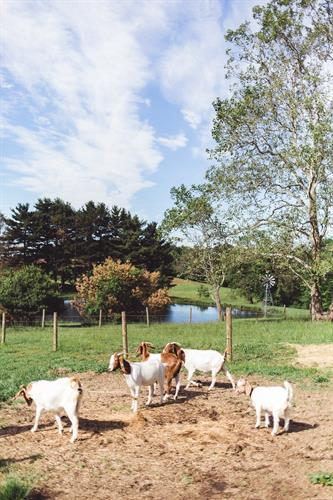 Bieberbach Farm, Newark