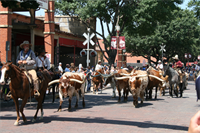 Fort Worth Herd