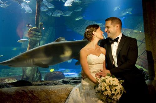 Shark Tank @ Long Island Aquarium