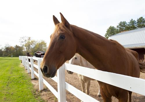 Equine therapy is offered to Rawhide's residential and outpatient clients at the New London, Shiocton and Fond du Lac locations.