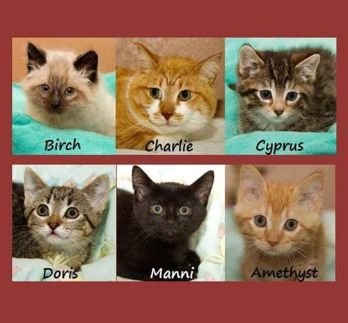 We could be your purrfect friend