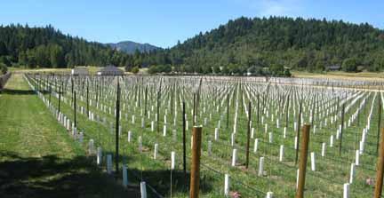 New vines, watch 'em grow.