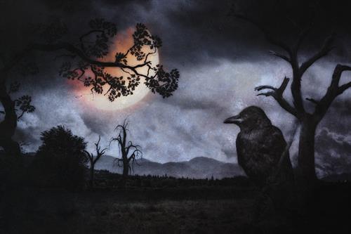 Gallery Image Crow.jpg