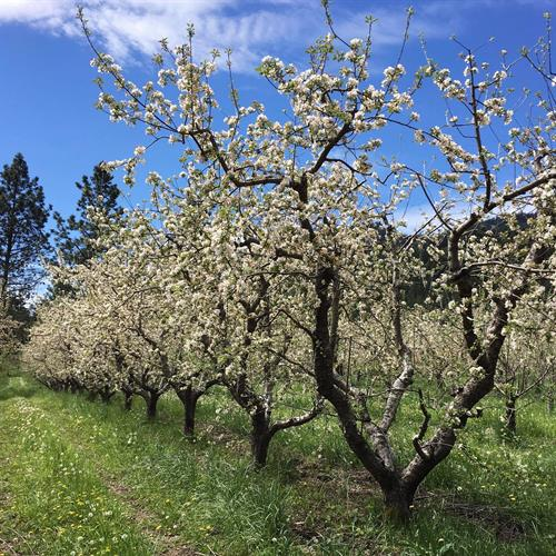 Our orchard is certified organic and we cherish our land and take our responsibility of being stewards of this beautiful place very seriously.