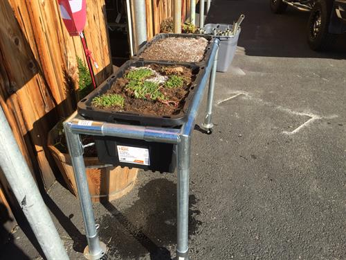 rot proof steel planter boxes, saves your back and never needs replacing