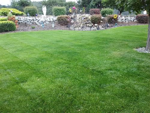 This is how I like my yards to look. This is the yard of my very first customer!