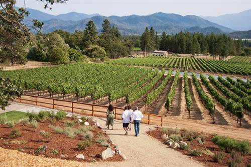 Take a walk amongst the Vineyard.