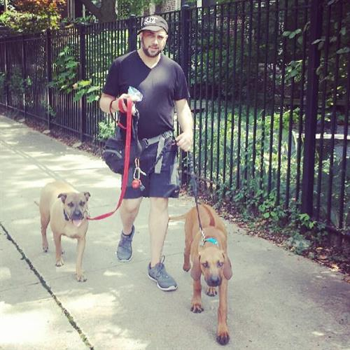 Ian walking Scooby & Astro