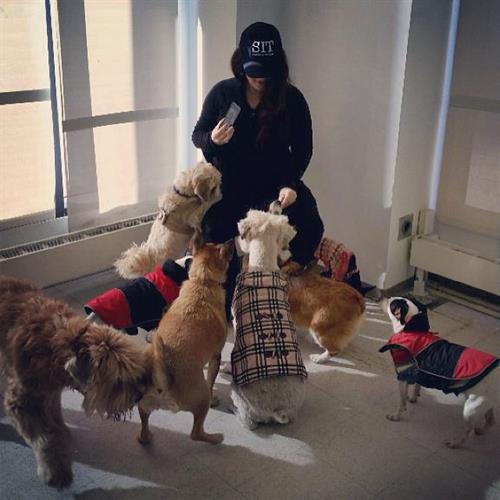 Victoria with a group of doggies at River North Park Project (Hired by Waterton Residential)