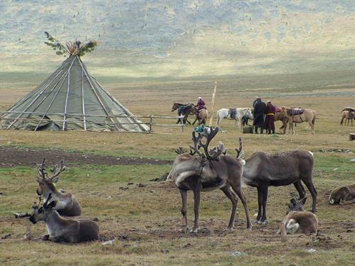 Trek to see the Tsaachin, Reindeer People of Mongolia
