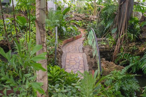 Gallery Image TropicalRmJan2019-7.jpg