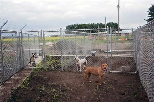 Book a $25 dog daycare consult with our 100% money back guarantee.
