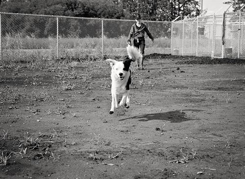 Members only off-leash dog parks.