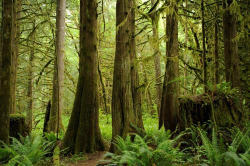 Gallery Image Forest_Fern_and_Moss.jpg