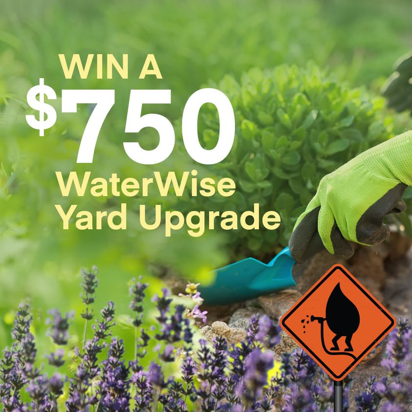 Image for Win a $750  Waterwise Yard Upgrade