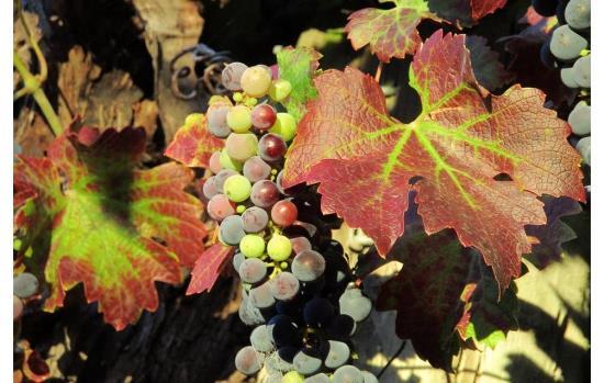 Wineries & Breweries
