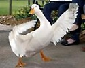 AFLAC-Sharon Hall